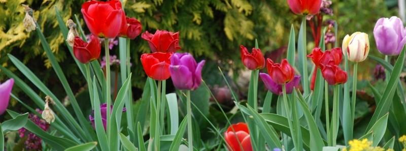 Obst-, Gartenbau- und Landschaftsverein
